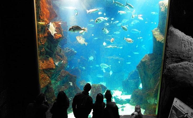 Aquarium Porto Moniz