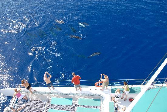 madeira catamaran dolphin