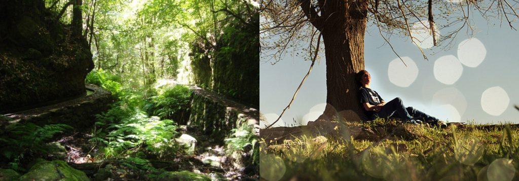Forest Bathing on Madeira - Tree hugging Madeira Island