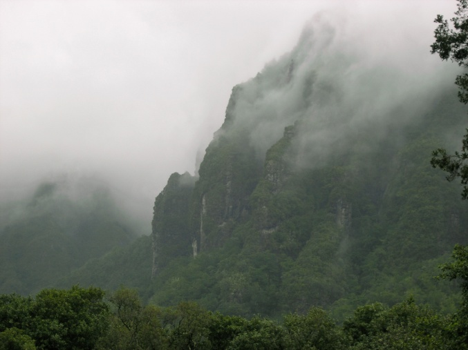 Laurissilva forests immersed in fog in the north slope of Madeira. Photograph: Celso Figueira