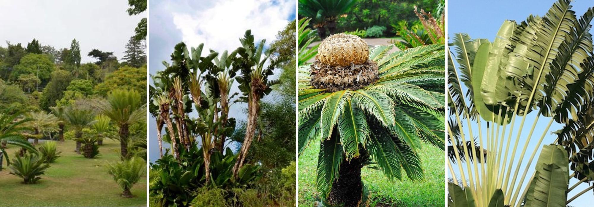 Jardins botaniques de palmiers Funchal Madère Portugal
