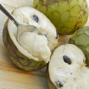 Essen Sie Annona Madeira anona