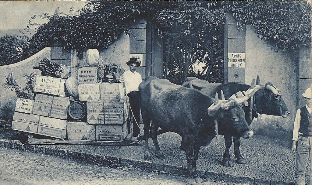 ox carts Madeira Portugal Funchal 1914
