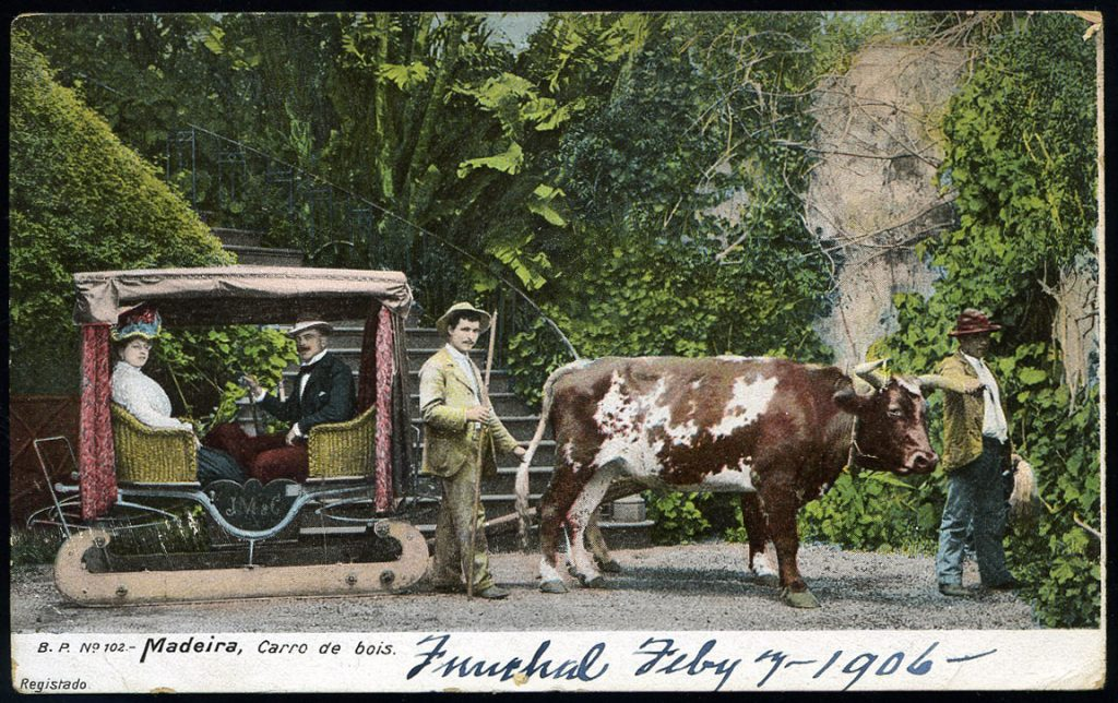 ox carts Madeira Portugal Funchal 1906