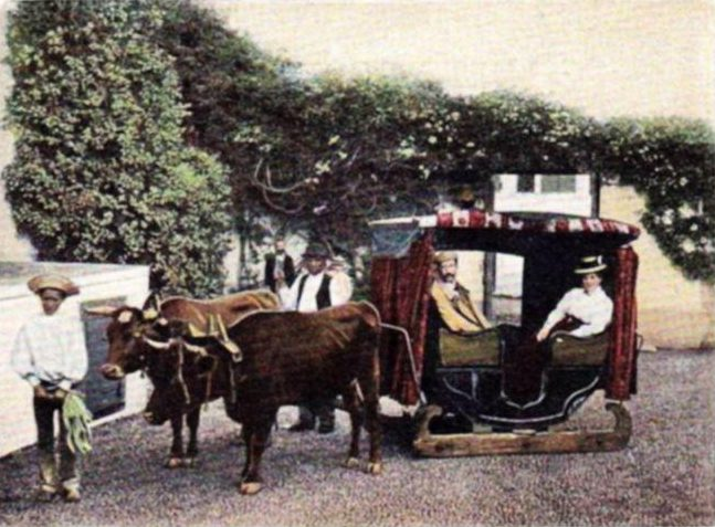 ox carts Madeira Portugal Funchal