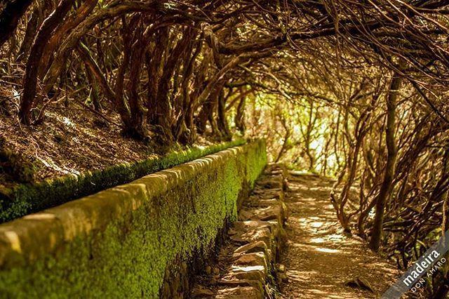 The Levadas – The waterways of Madeira