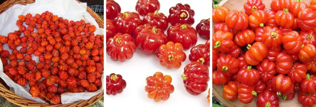 Pitanga Madeira Portugal Fruit
