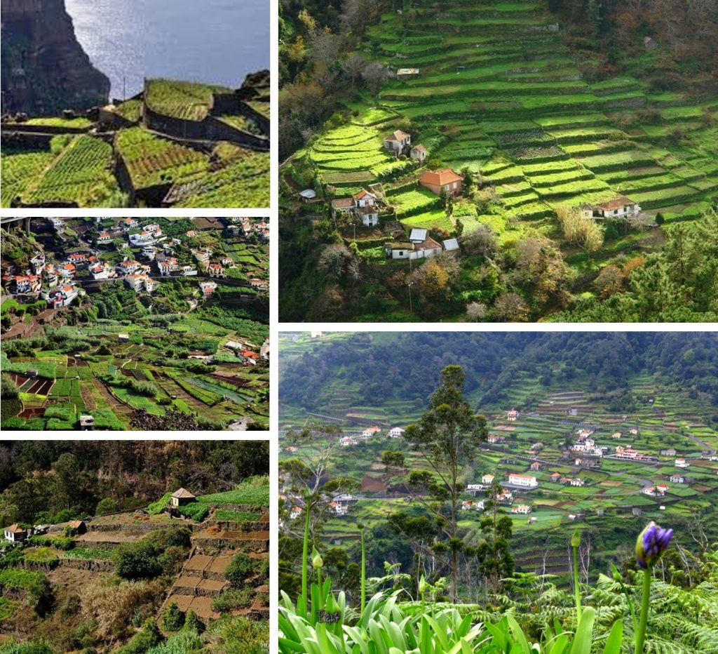 Terraced Fields Madeira Portugal Poios