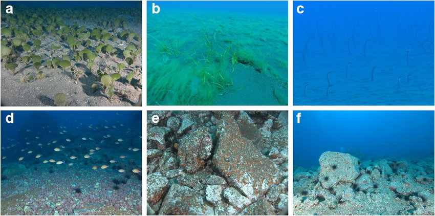 """Cabo Girao Madeira - Above ar some of the main habitats found inside the study area. a: Avrainvillea canariensis meadow; b: Cymodocea nodosa patch; c: Garden eel colony; d: maërl bed; e: rocky reef; f: """"barren"""" rocky reef"""
